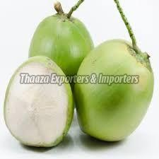 Tender Coconut in Kerala - Manufacturers and Suppliers India