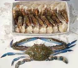 Frozen Blue Swimming Crab