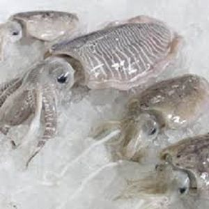 Frozen Cuttlefish Fish