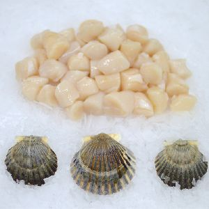 Frozen Shell Meat