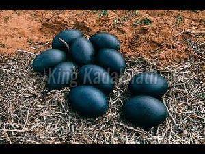 Kadaknath Black Poultry Eggs
