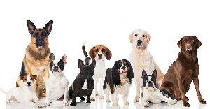 Dog Breeding Services