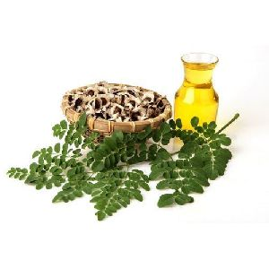 Moringa Ben Oil Seeds