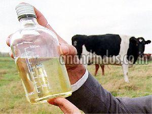 Cow Urine Extract