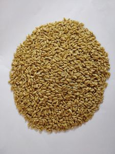Natual Lokone Wheat grain