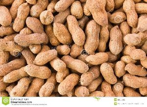 Shelled Peanut