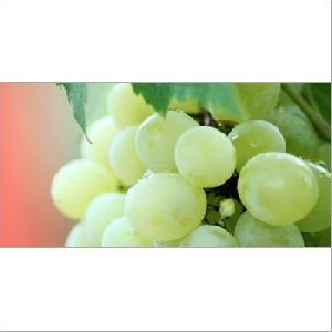 Farm Fresh Green Grapes