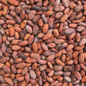 Organic Cocoa Beans