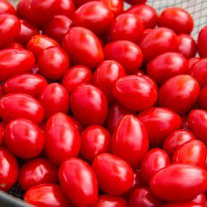 Fresh Tomato dec 2019 to mar 2020