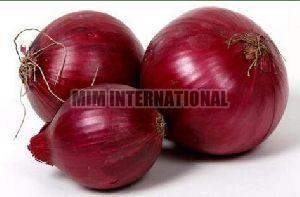 Fresh Big Onion