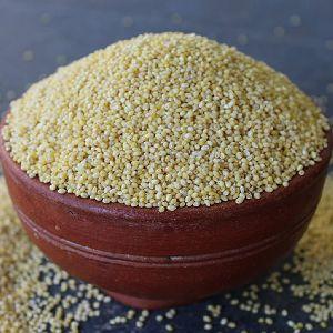 Proso Millet Seeds
