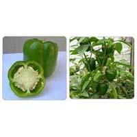 Capsicum Seeds