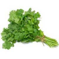 Green Coriander