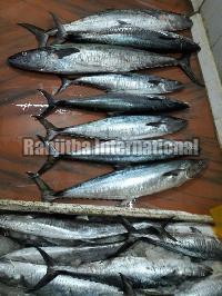 Fresh Chilled King Fish