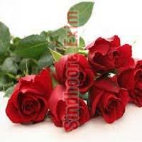 Fresh Red Rose Flower