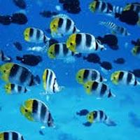 Live Marine Fish