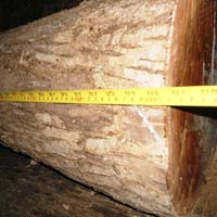 Bocote (Cordia Elaeagnoides) Wood Logs