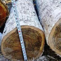 Ziricote (Cordia Dodecandra) Wood Logs