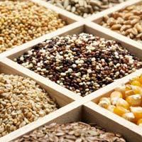 Agricultural Seeds