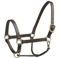 Horse Halter