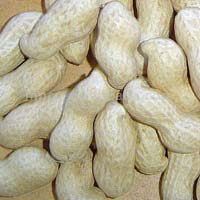 Shelled Peanuts