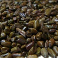 Charota Seeds