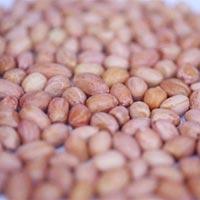 Java Peanuts