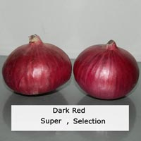 Fresh Red Onion Seed