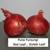 Puna Fursungi Red Leaf Onion Seed