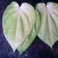 Mogai Betel Leaves