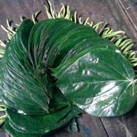Tokapali Sweet Betel Leaves