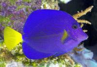 Marine Aquarium Fish -02