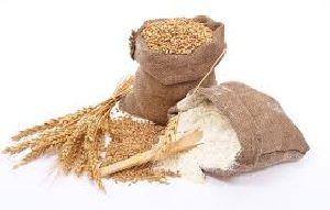 Wheat / Flour
