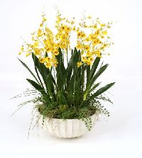 Gold-yellow Dancing Orchids With Grass