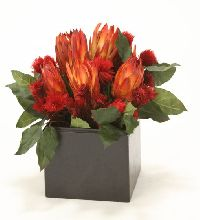 Natural Protea w Red Repens Wood Planter
