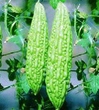 Bitter Gourd - Karela