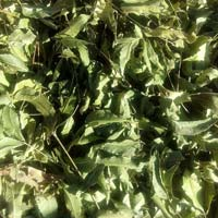 Dried Neem Leaves