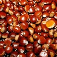 Fresh Organic Sweet Peeled Roasted Chestnut