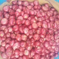 Fresh Nashik Onion
