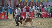 Livestock Pets