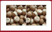 Jeeni Manglore Betel Nuts