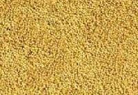 Organic Mustard Seed