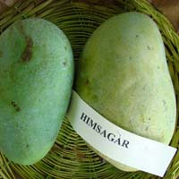 Fresh Himsagar Mango