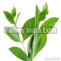 Fresh Henna Leaves