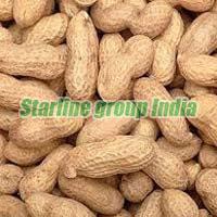 Groundnut 01