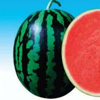 Dharma AWH-111 Hybrid Watermelon Seeds