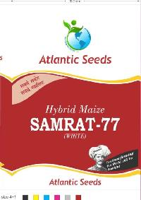 Samrat-77 Hybrid White Maize Seeds