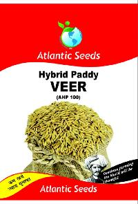 Veer Hybrid Paddy Seeds