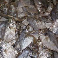 Pony Fish/Small Flat Fish dried