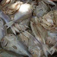 Tread Fin Bream Dried Fish